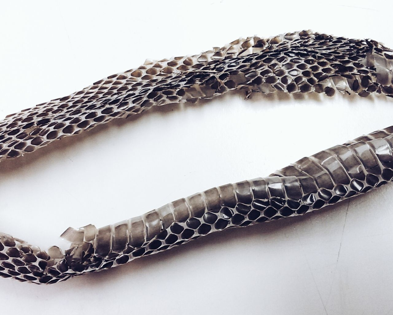 Snake scales against white background