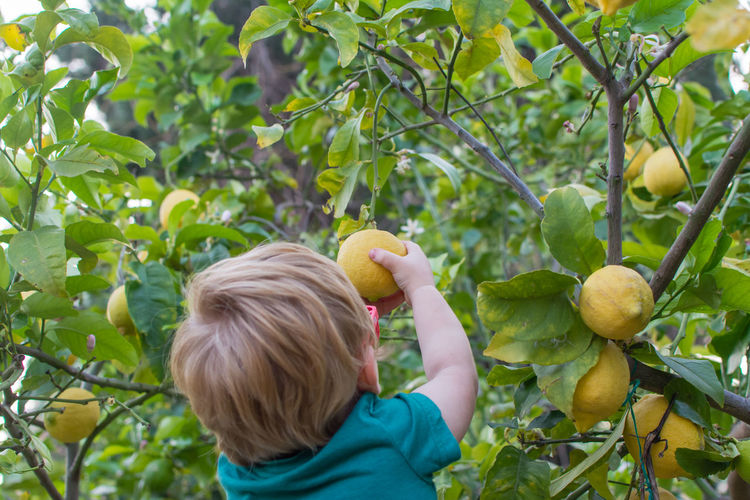 Rear view of boy holding apple against tree