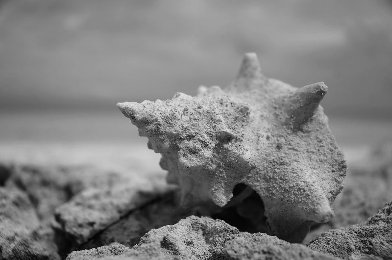 Seashell covered with sand