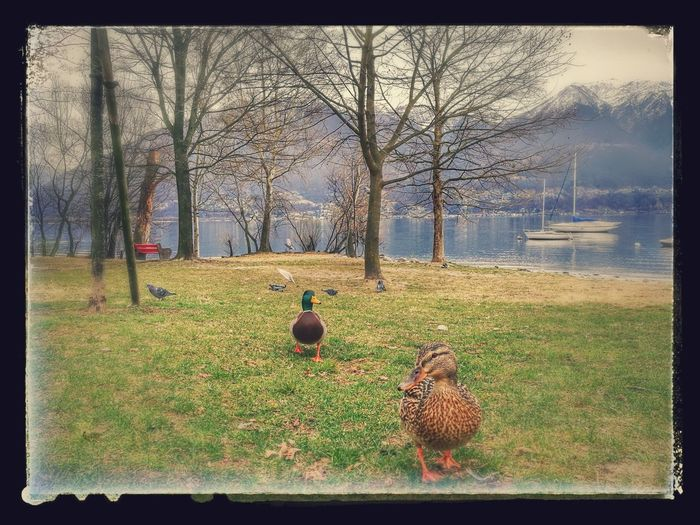Lago Verbano - Ticino Nature Outdoors Animal Themes Water