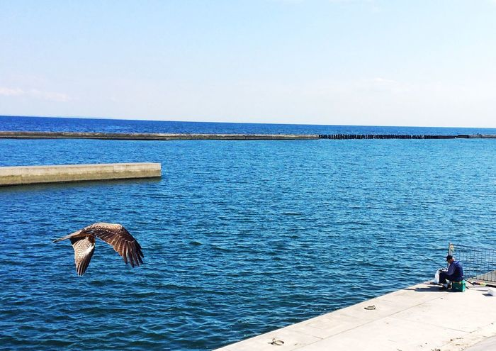 鳶と釣り人 Fisherman Kite Blue Sky Oceanlife 平塚