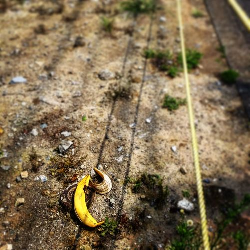 Walking Around Taking Photos Mobilephotography Lost Property Banana Peel Mistery
