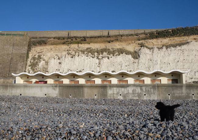 Dog On The Beach Art Deco Architecture Beach Huts Architecture Nature Animal Animal Themes Travel Destinations No People One Animal Day Built Structure Building Exterior Mammal Sky Clear Sky Solid Blue History Rock Domestic Animals The Past Travel Brighton