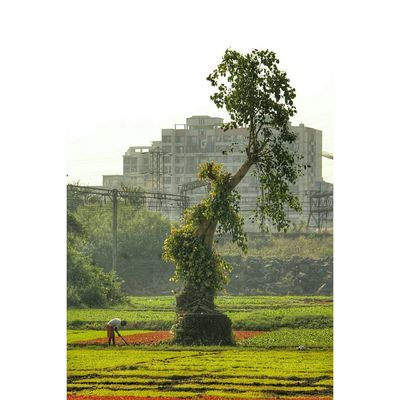 Plant Tree Architecture Grass Nature Sky Day Outdoors Men Travelingram Travel Destinations Beauty In Nature Wanderersoul Environment EyeEmNewHere Indianphotography EyeEm Masterclass EyeEm Best Shots - Nature Eye4photography  EyeEm Best Edits Photography Themes Indianphotographer
