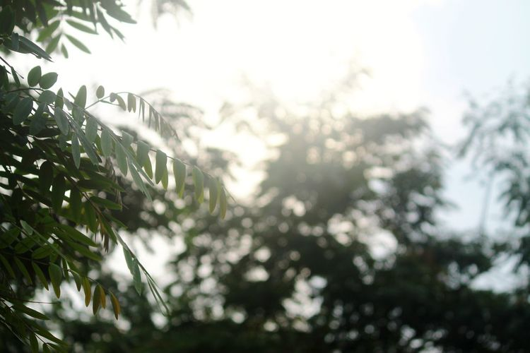 Views. Tree Defocused Nature Morning No People Beauty Branch Close-up Freshness Leaf Beauty In Nature EyeEmNewHere Focus On Foreground Growth Day Plant Outdoors Sky