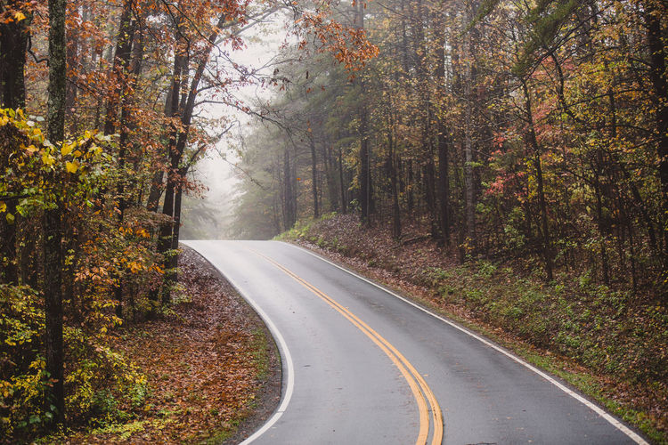 Absence Asphalt Autumn Bare Tree Chalking Up The Road , Cause Can. Change Colors Composition Empty Fog Footpath Forest Leading Leading Lines Narrow Park Perspective Rainy Day Road Season  The Way Forward Tree Tree Trunk Treelined Weather