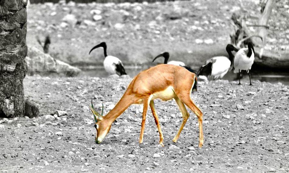 O My Deer Animal Themes Animals In The Wild Animal Animal Wildlife Outdoors Mammal