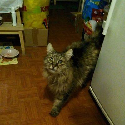 #cat #cats #catsagram #instagramcats #instacats #caturday #catoftheday #we_love_cats #mycat #katz #katzen #catsofinstagram Cat Cats Katzen Caturday Mycat Catsofinstagram Instagramcats Catsagram Catoftheday Instacats We_love_cats Katz