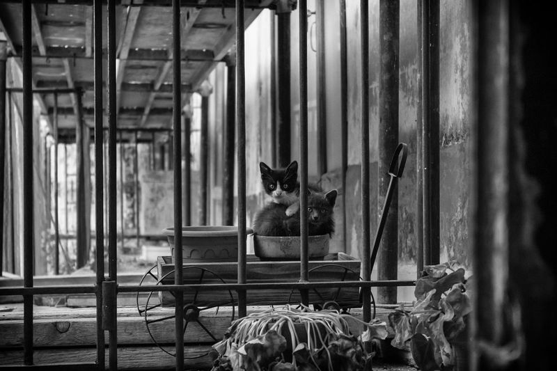 Abandoned Cats Black And White Blackandwhite Cat Cat Street Feline Kitten Kittens Kitty No People Pets Stray Cat Street Street Photography Streetphoto_bw Streetphotography