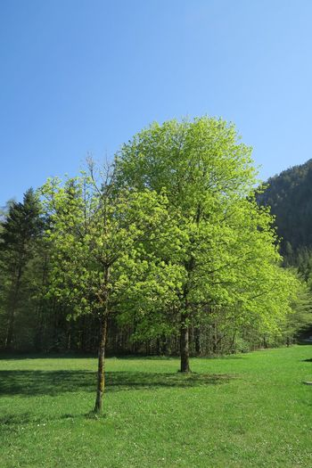 Gosamule Hallstatt Plant Tree Sky Growth Green Color Clear Sky Nature