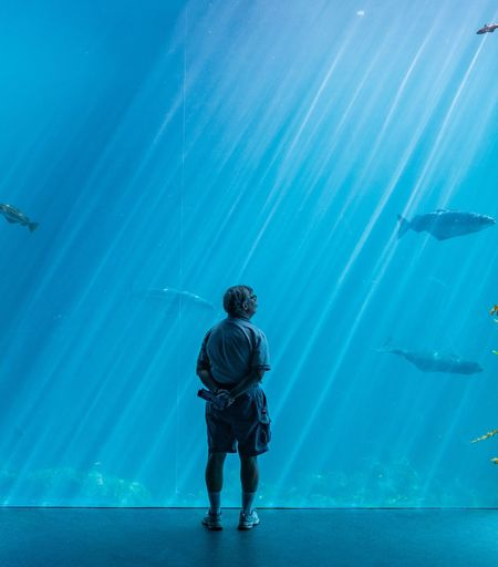 Rear View Of Senior Man Looking At Fish In Aquarium