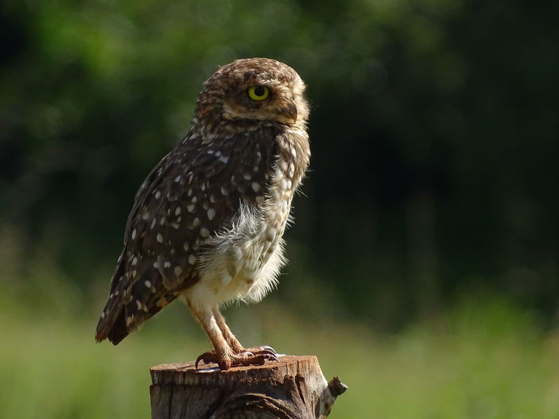 ezefer Owl Eye Animal Themes Animal Wildlife Animals In The Wild Bird Bird Of Prey Close-up Day Focus On Foreground Full Length Nature No People One Animal Outdoors Owl Perching