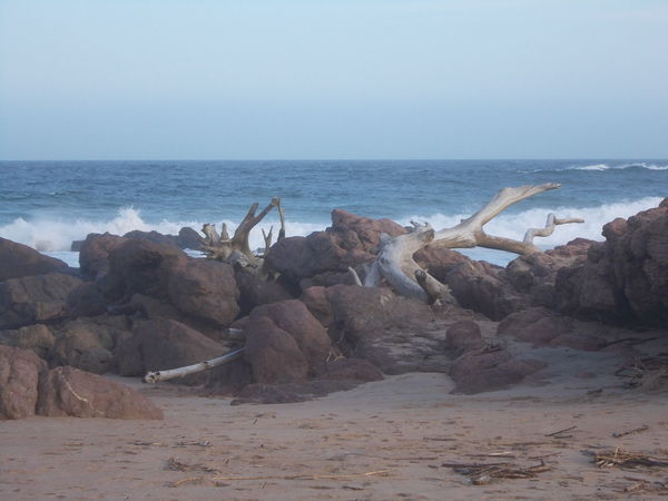 Desolation Beach Desolation Driftwood Nature No People Rock - Object Sand Scenics Sea