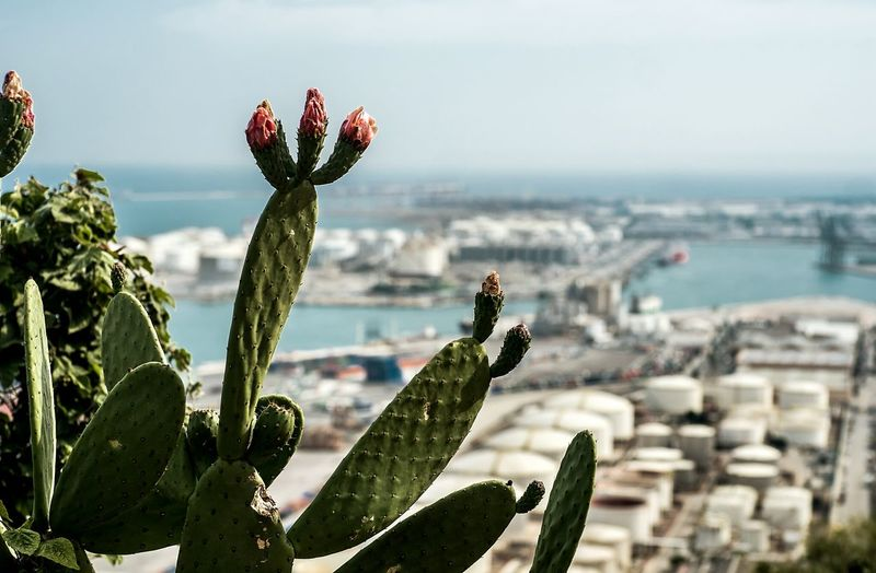 Close-Up Of Cactus Against Harbor