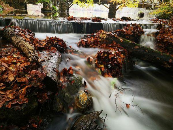 Water Nature Day Tree Outdoors Turkey Bolu  Yedigöller Milli Parkı