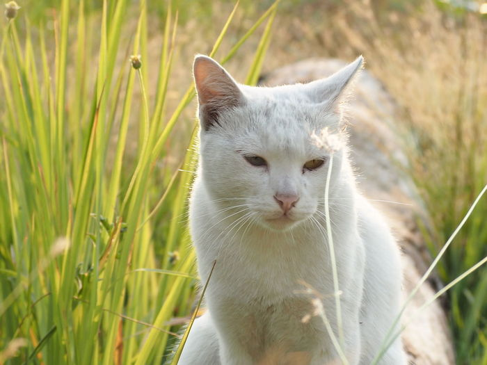 Close-up of a cat lying on grass