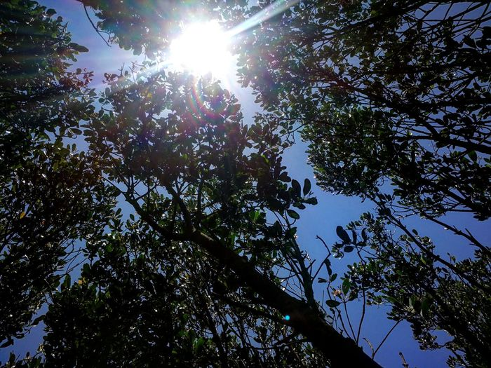 Tree Low Angle View Nature Branch Sky Growth Day Beauty In Nature No People Sunlight Outdoors Sun Clear Sky Leaf Forest Tree Area Freshness