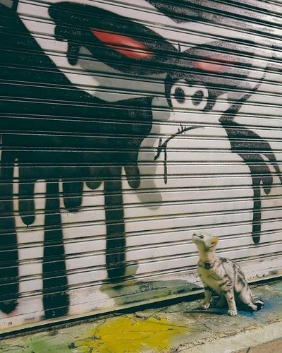 Hip chaba cat บ้านแมวหนวด แมว Cats Chill Art Grafitti Chill Chic Neko Mypet Phuket Thailand Trip Travel Island Smile
