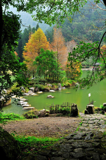 Autumn season, colorful lake view. Autumn Natural Scenery Animal Themes Autumn Beauty In Nature Bird Branch Compared Day Fall Grass Growth Lake Leaf Nature No People Outdoors Peaceful Plant Quiet Forest Scenics Tranquil Scene Tranquility Tree Water