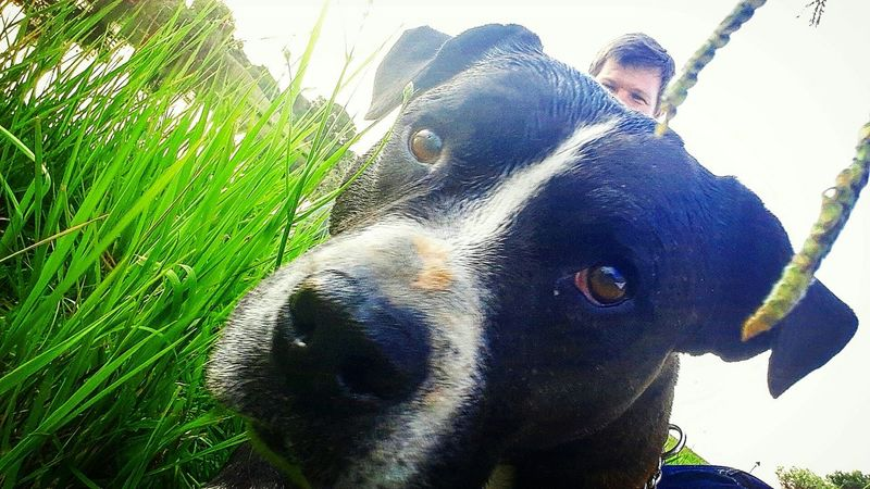 South Africa Green Beautiful Nature Photography Nature Animal Photography Animal Dog Staffie Black And White