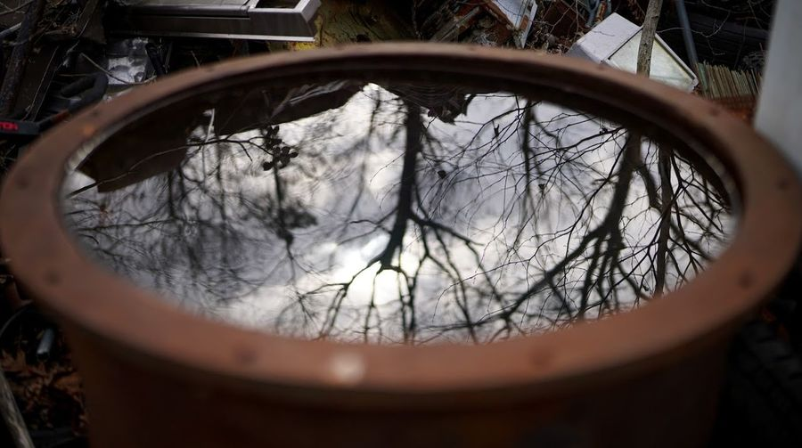 Reflection of tree in mirror