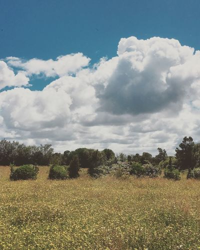 Chacao con nubes. Analogue Photography Cloud - Sky Sky Plant Beauty In Nature Tranquility Tree Field Tranquil Scene Land Nature Landscape No People Sunlight