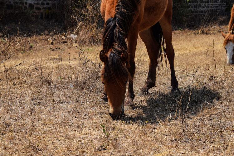 Horse grazing in a field