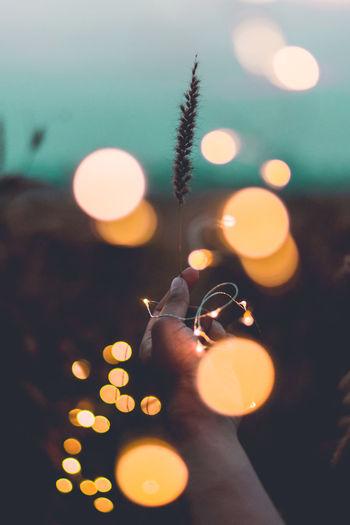 Cropped image of hand holding illuminated string lights during sunset