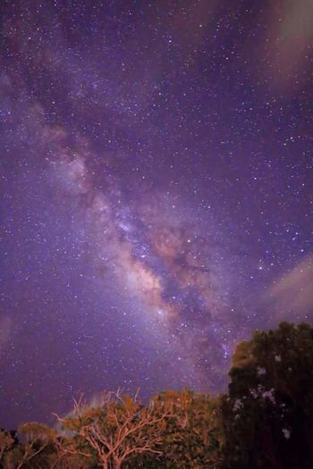 Star - Space Night Milky Way Astronomy Space And Astronomy Space Galaxy Constellation Landscape Tranquility Nature Sky Scenics Science No People Mountain Beauty In Nature Outdoors Tree Moon