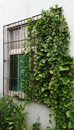 Leaves Nature Vertical Composition Green Plants On Wall Window Plants On Window Security Bar