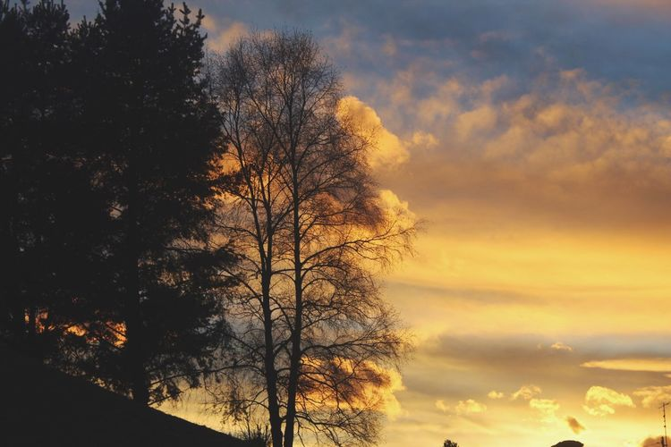 Tree Sky Tree Sunset Nature Beauty In Nature Tranquility Cloud - Sky Tranquil Scene No People Scenics Silhouette Growth Outdoors Branch Bare Tree Day Alberi Sunset_collection Tranquility Tramonto Mountain Photo Nuvole Case Fotografia -CM