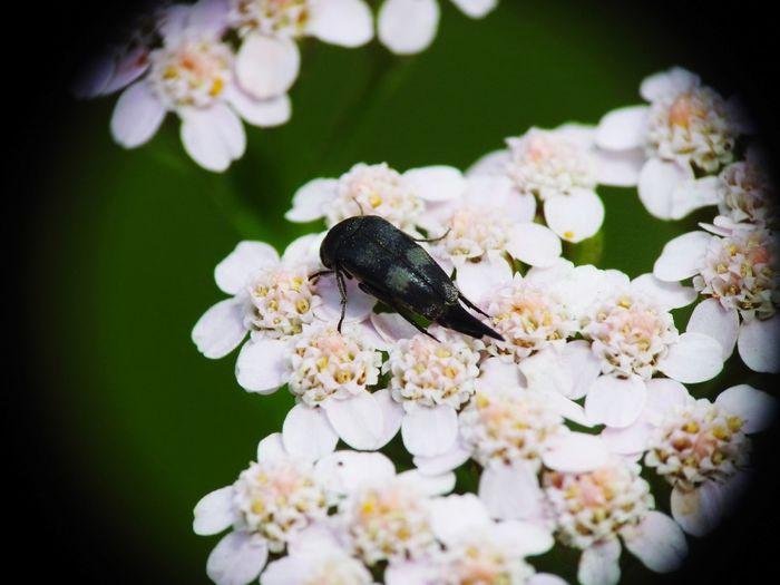 Bug Bugslife