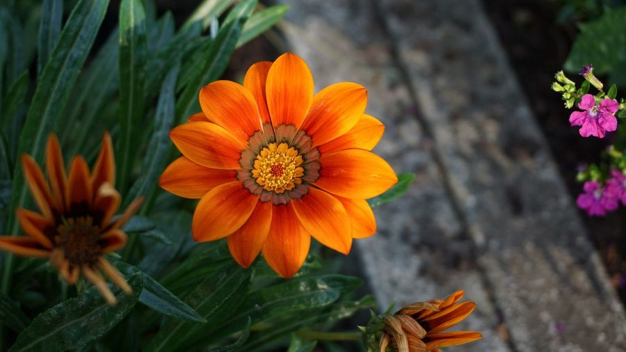 Just smile...😊 Flowering Plant Flower Plant Freshness Fragility Petal Flower Head Vulnerability  Inflorescence Orange Color Growth Beauty In Nature Nature Close-up Pollen No People Focus On Foreground Outdoors Botany Day