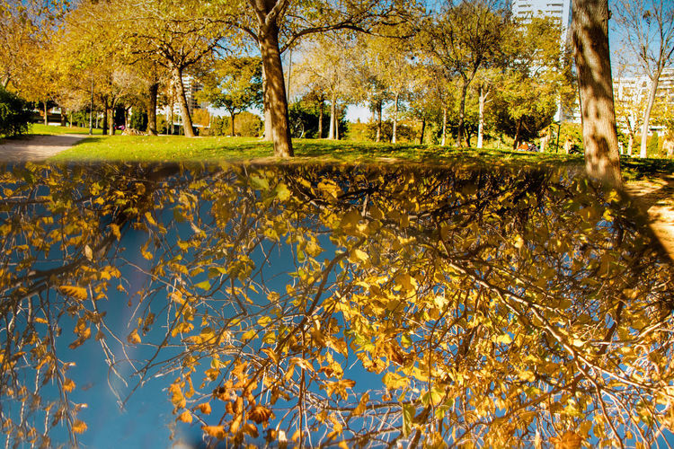Trees and leaves in lake during autumn