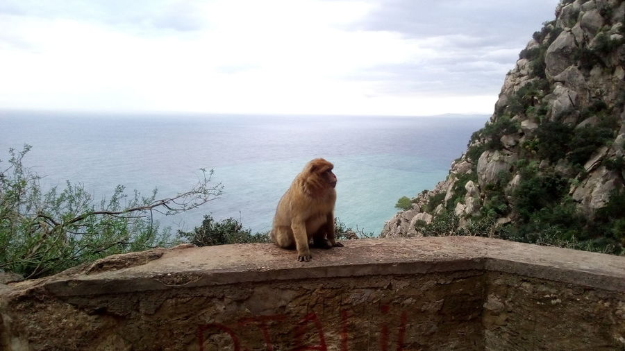 Monkey sitting on rock by sea against sky