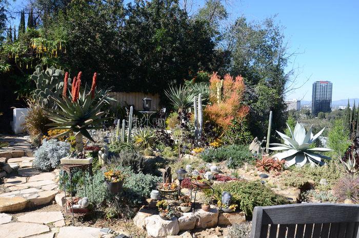 Cactus Cactus Garden Desert Beauty Desert Garden Desert Landscape Desert Life Desert Plants Succulent Plants