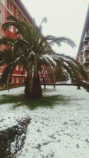 Tree Nature Winter Snow