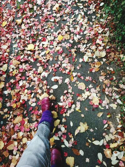 Low section of person walking on leaves