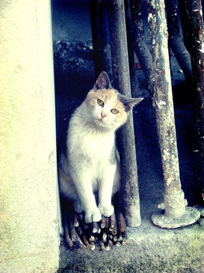 A street cat in