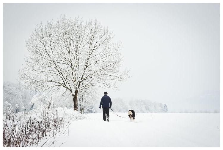 Rear View Of Man Walking Dog On Snowy Field