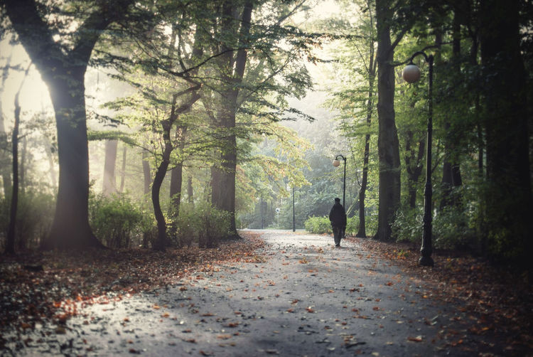 PERSON WALKING ON ROAD IN FOREST