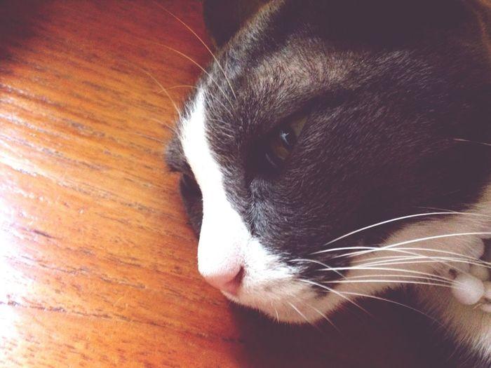 Cat Watching