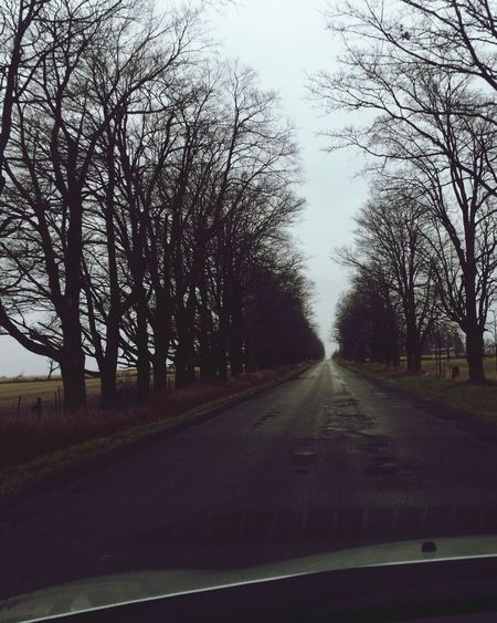 Afternoon Drive In The Country - Roads Lined With Tall Trees Drive Road Trees Pavement Driving Around Driving Shot  Country Road In The Car In The Country Tall Trees Wet Road Tree Lined Street Tree Lined Drive Tree Lined
