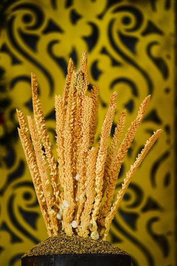 Coconut Flower Flower Yelow Wallpaper