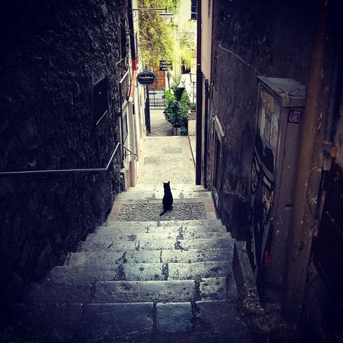 Black cat alley EyeEm Best Shots Eye4photography  EyeEm Gallery EyeEm Selects eyeemphoto Black Cat Alleyway Scicli, Sicily Cats Of EyeEm Alleyways Steps And Staircases Onguard On Guard On Duty My Alley Stairs Hand Rail Staircase Stone Tile Alley Pathway Cobbled Lane Stairway Narrow Walkway