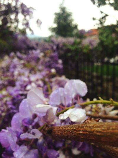 Home Garden Flowers Turkey