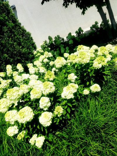 Natures Garden Green Color Beauty In Nature Sunlight Grass No People Outdoors Day Sky Nature Plant Tree Growth