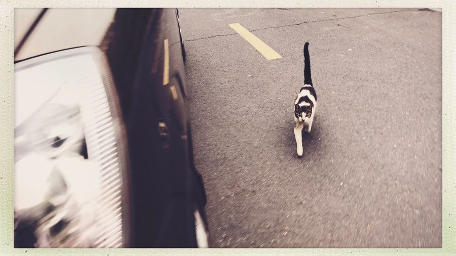 Citylife Streetphotography Cat Animal Themes Animal Mammal Domestic Animals One Animal Domestic Pets No People Auto Post Production Filter High Angle View Vertebrate Road Transportation Transfer Print Canine Day City Leash Street