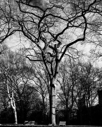 Veins Trees Tree Park Nature Independence Hall Blackandwhite Black & White Black And White Photography Bnw