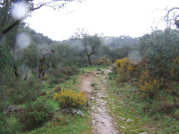 Dirt Path Foggy Day Foggy Landscape Foggy Weather Footpath Forest Grass Grassy Grassy Field Green Color Mountain Range Non-urban Scene Paved Path Remote Solitude The Way Forward Trail Tranquility Tree Trekking Walkway